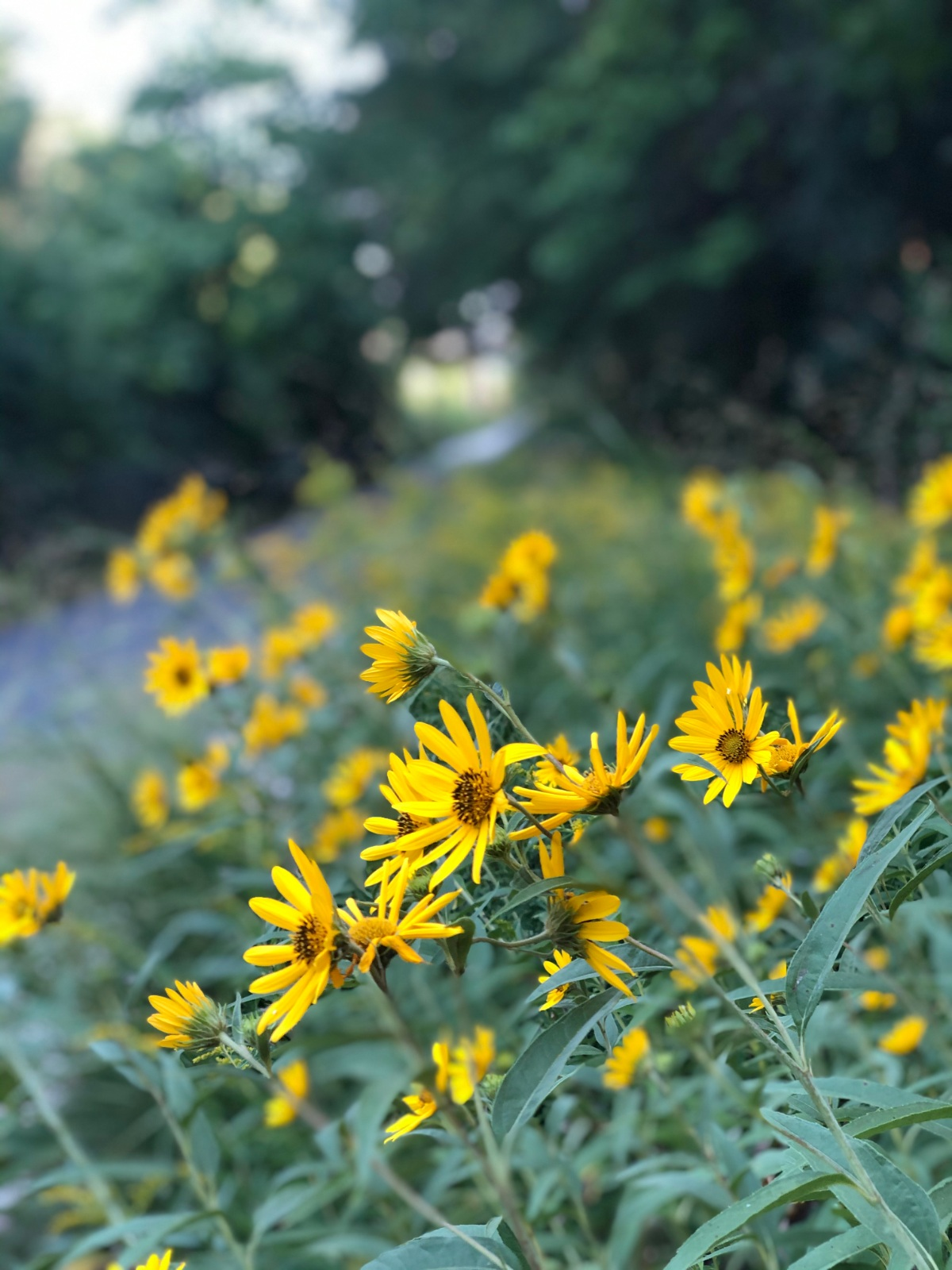 Enjoying the flowers along the trail on the last day of August.