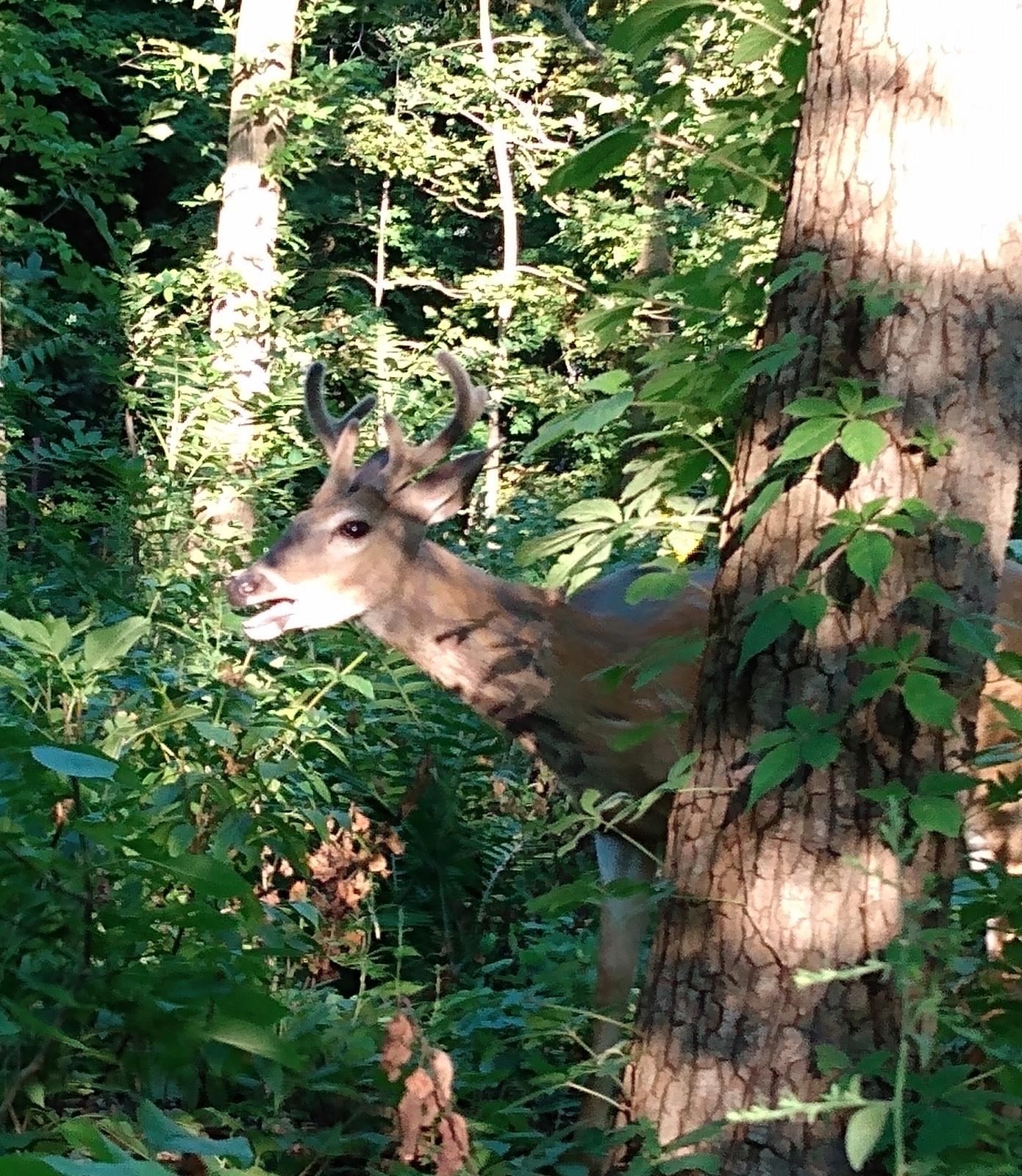 Hello deer!