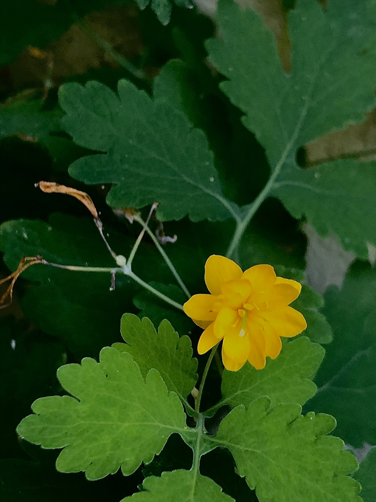 Emerging Yellow
