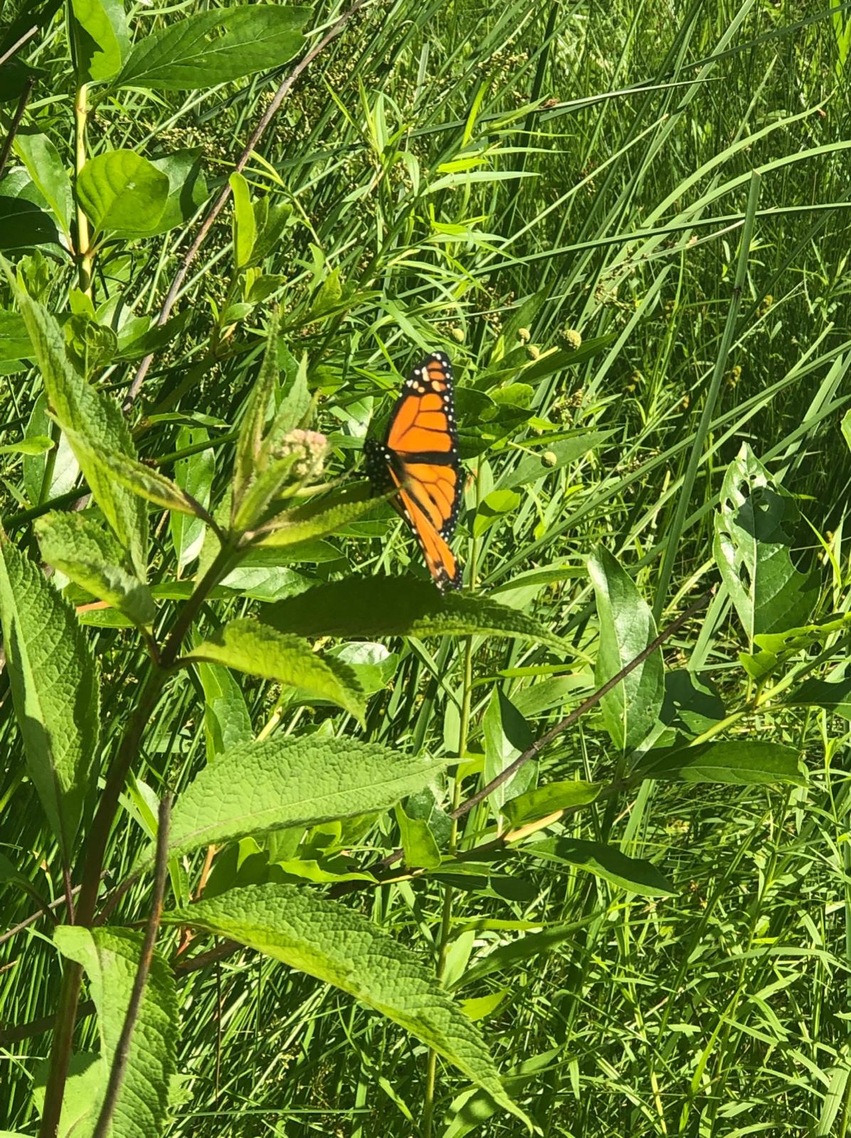 Monarch Mealtime