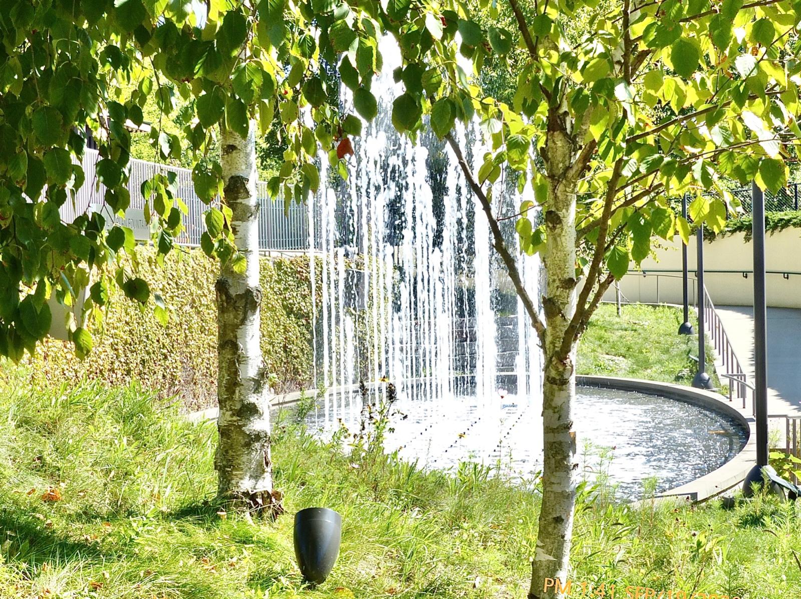 Tree Framed Fountain At Ravinia