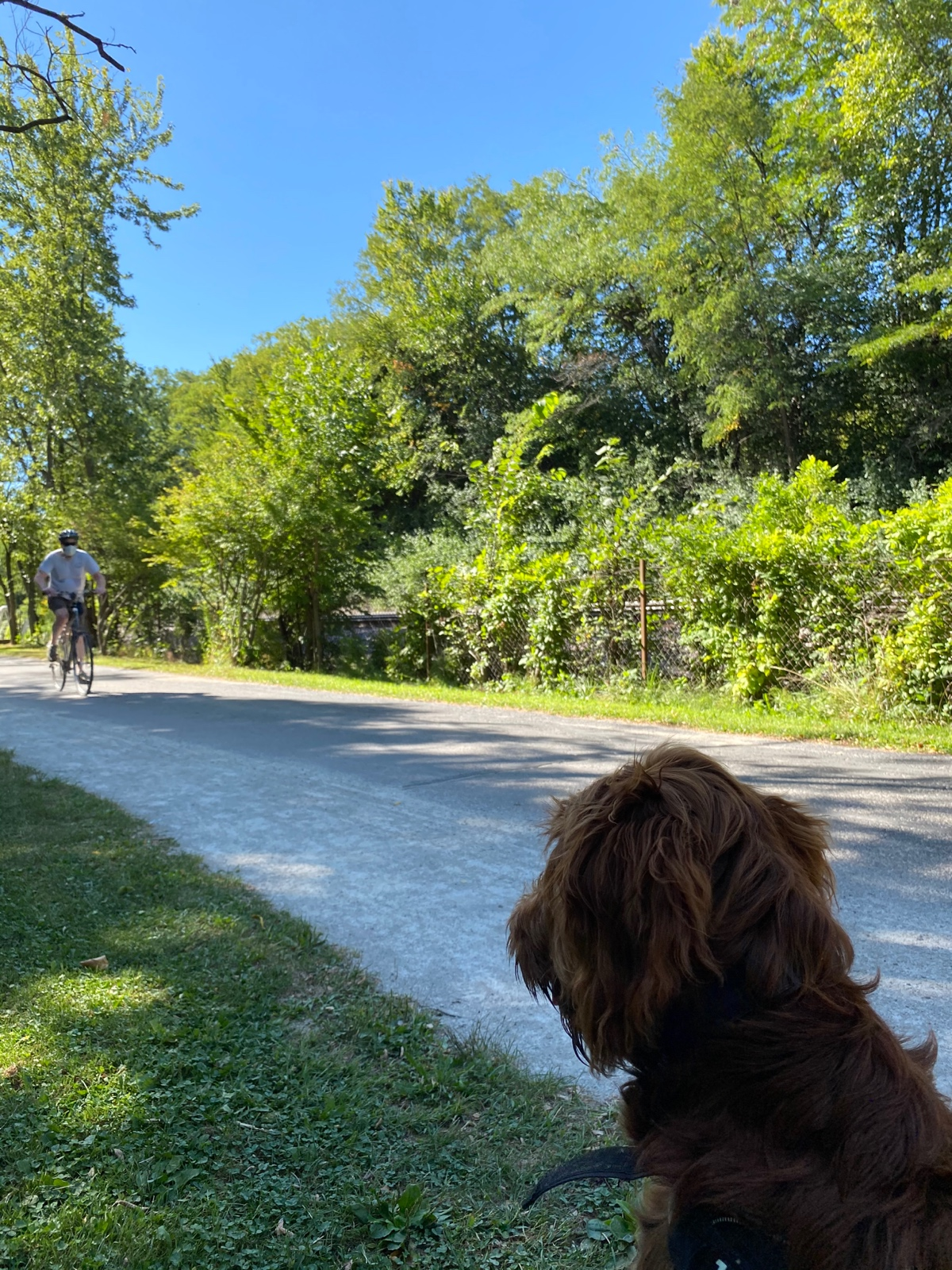 A Puppy Watching Life on The Trail