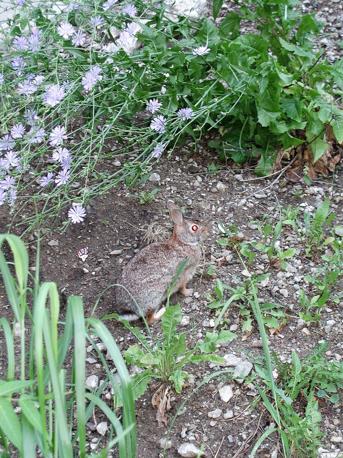 Bunny-Best