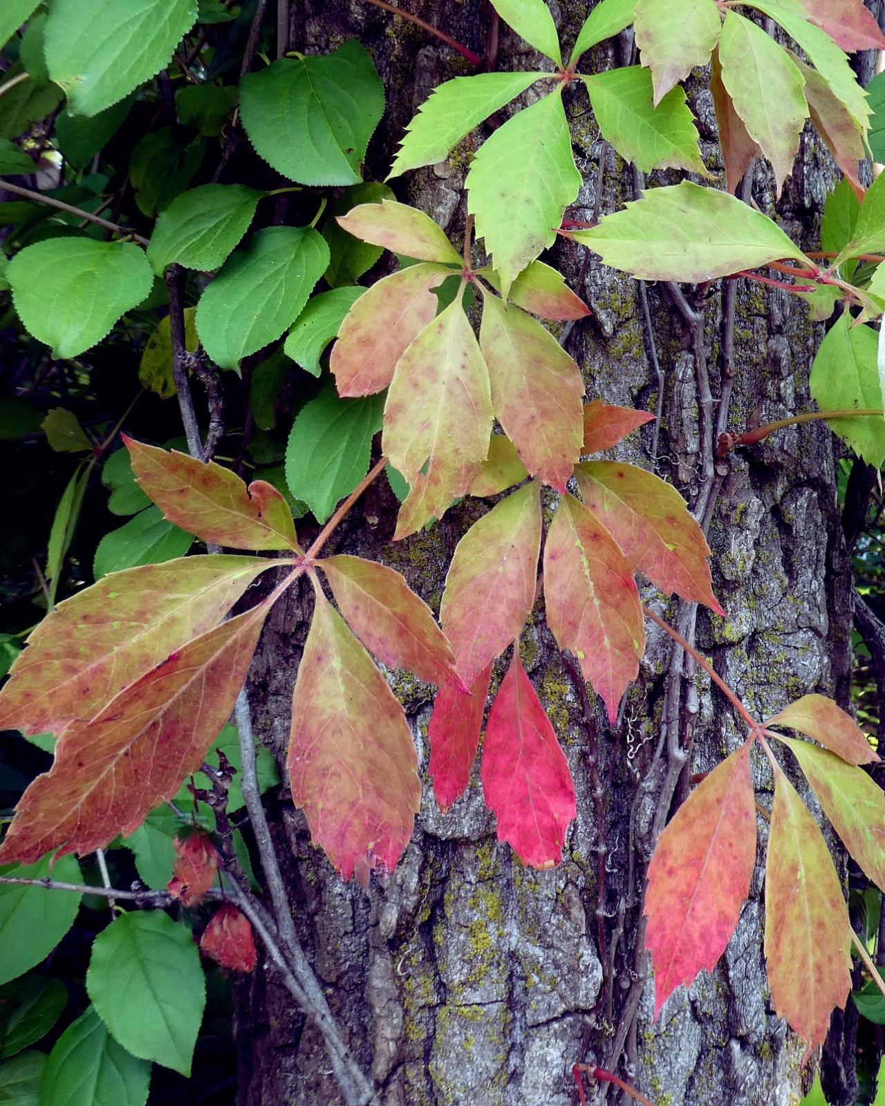 Fall's Beginnings
