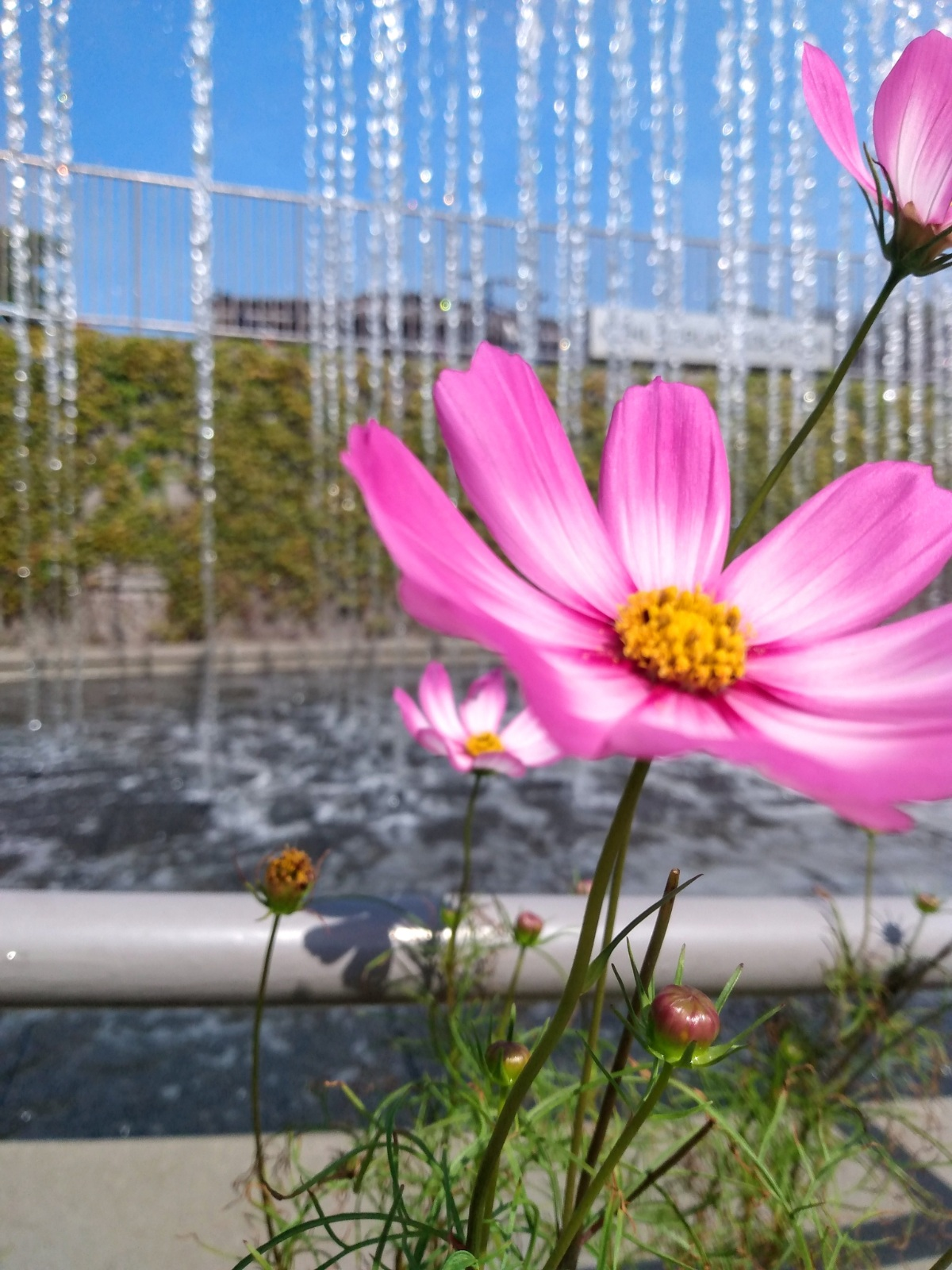 Flowers and Fountains