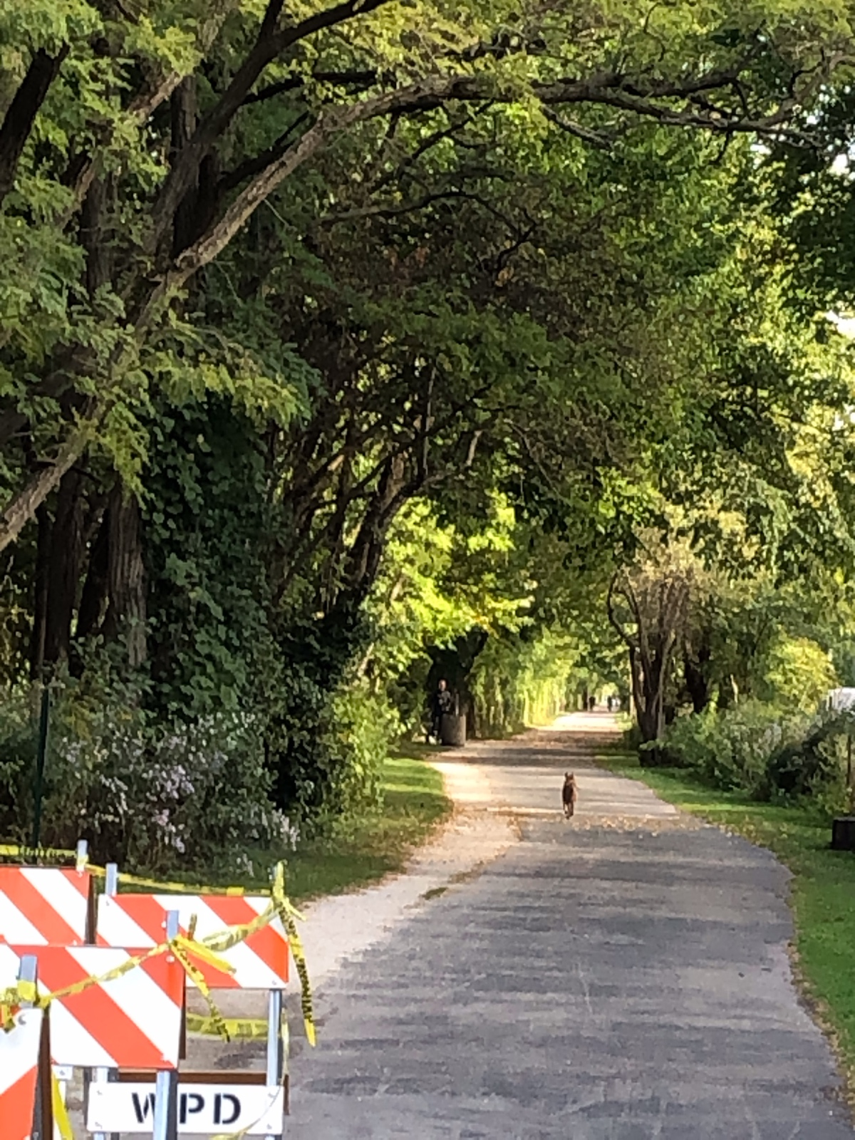 Coyote—- Time 4:00PM   Green Bay Trail , Tuesday September 29